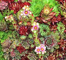 Mixed Succulents by AnnDixon