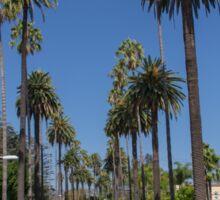 LA Palm Trees Sticker