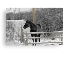 Cold But Hardy Canvas Print