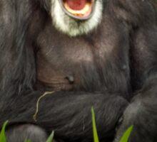 Yawning Chimp Sticker