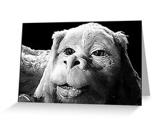 Falkor The Luck Dragon From The Neverending Story Design Greeting Card