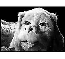 Falkor The Luck Dragon From The Neverending Story Design Photographic Print