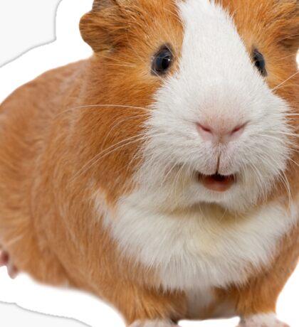 red guinea pig Sticker