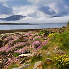Island of Hoy. Spring Flowers from Ness Point, West Orkney. Scotland. by PhotosEcosse