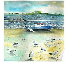 Seagulls In Ireland Poster