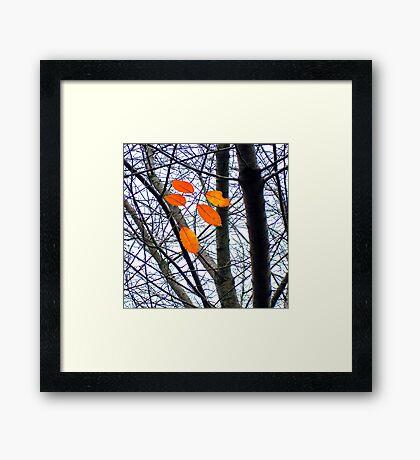 Five Orange Leaves Framed Print
