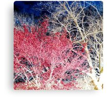 Red Leaves White Trees Blue Skies Canvas Print