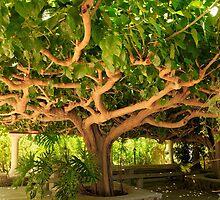 kiwi tree by Benjamin Gelman