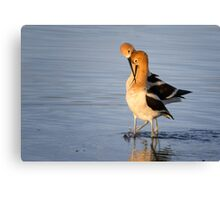 After mating dance Canvas Print