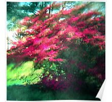 Spring Pink Sun Green Poster