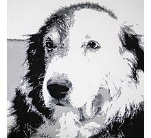 Ringo (acrylic on canvas) Photographic Print