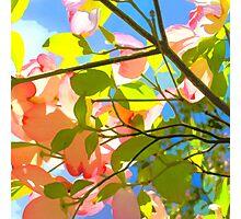 Spring Light Photographic Print