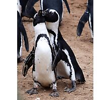 Penguin couple Photographic Print