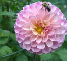 .Dahlia With Bee. Sticker