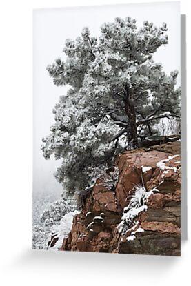 Snowy tree on red rock by Eivor Kuchta