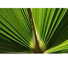 Frond Photographic Print