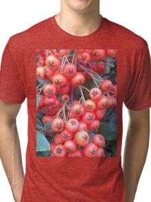 Cotoneaster 3 Tri-blend T-Shirt