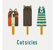 Catsicles Photographic Print