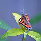 July Butterfly by lisa1970