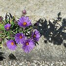 Wildflower Shadows by Monnie Ryan