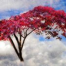 Red Tree in Summer by Christine Lake