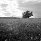 Cow Parsley and the Old Tree by Matthew Walters