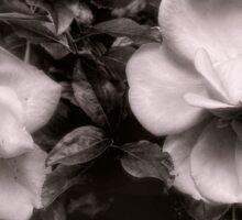 Vintage Roses in Antique Tones Sticker