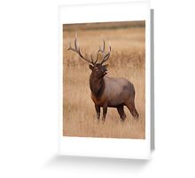 Funny Elk Raspberry Greeting Card