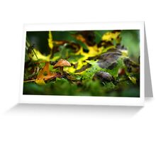 Tiny Brown Mushroom Among Fallen Leaves Greeting Card
