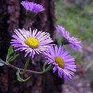 Rocky Mountain wildflowers by Bernie Garland