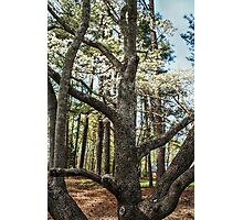 Trunk of the Tree Photographic Print