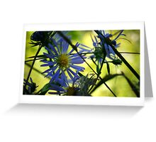 Blue Aster Flower Greeting Card