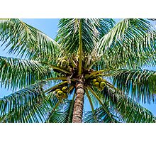 Driving me Coconuts Photographic Print