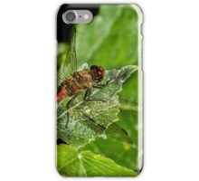 Male Common Darter Dragonfly iPhone Case/Skin