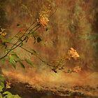 Autumn by Fara