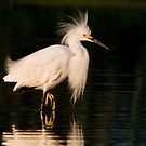 Egret Hairdo by Eivor Kuchta