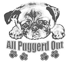 Puggerd out pug  Photographic Print