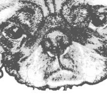 Puggerd out pug  Sticker