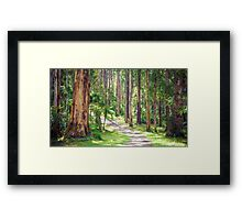 Mountain Ash in the Dandenongs - Melbourne, Victoria Framed Print