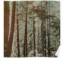 Oregon Woods Poster