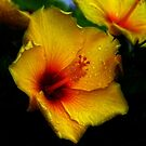 Yellow Hibiscus  by Brian104