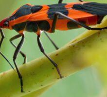 Milkweed Bug Sticker