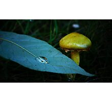 Yellow Mushroom and Droplet on a Leaf Photographic Print