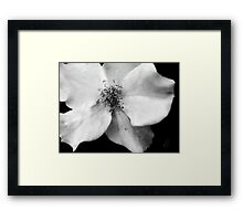 Flutterbye Rose in Black and White Framed Print