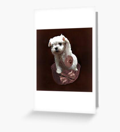 MALTESE PUPPY-JUST PLAYIN WITH MY YO-YO - I WONDER IS ANYBODY WATCHING LOL /PILLOW / TOTE BAG Greeting Card