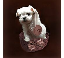 MALTESE PUPPY-JUST PLAYIN WITH MY YO-YO - I WONDER IS ANYBODY WATCHING LOL /PILLOW / TOTE BAG Photographic Print