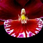 Prom - Orchid Alien Discovery by ©Ashley Edmonds Cooke