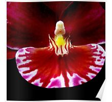 Prom - Orchid Alien Discovery Poster