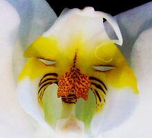 Tom - Orchid Alien Discovery by ©Ashley Edmonds Cooke