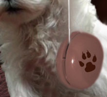 MALTESE PUPPY-JUST PLAYIN WITH MY YO-YO - I WONDER IS ANYBODY WATCHING LOL /PICTURE/CARD Sticker